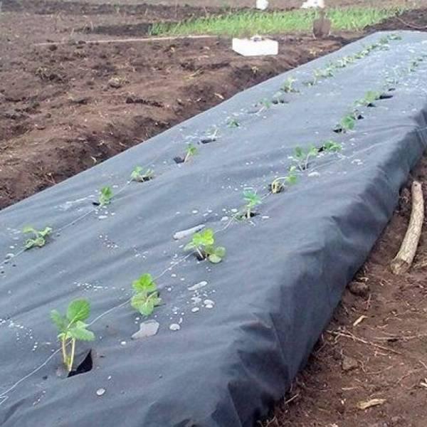 Агроволокно 50 г/м2, 3,2 x 10 м, черное