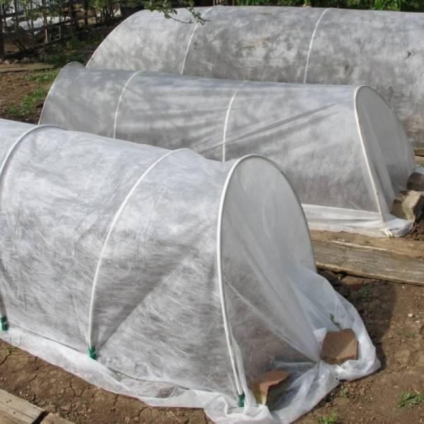 Агроволокно 19 г/м2, 2,1x100м, белое