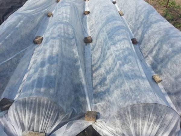Агроволокно 19 г/м2, 1,6 x 5 м, белое