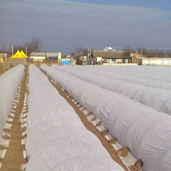 Агроволокно 30 г/м2, 6,3x100м, белое